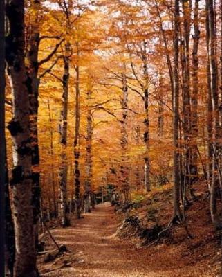 Crónica de un otoño o historia de un amor invertido.